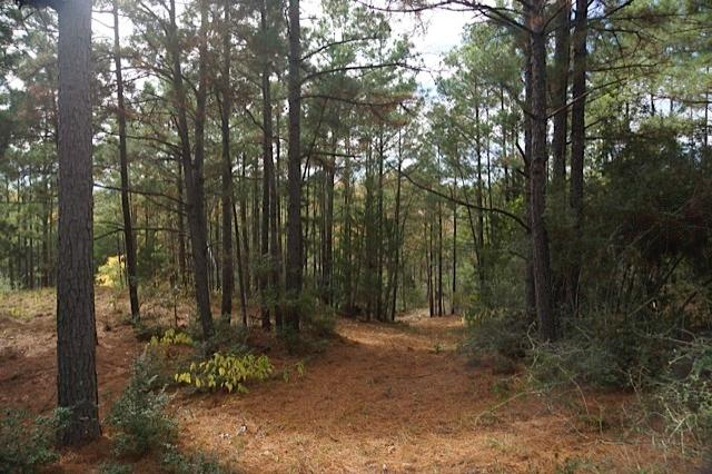 Le réseau de sentiers de marche sur 20 acres de propriété et de faire qu'un avec la nature