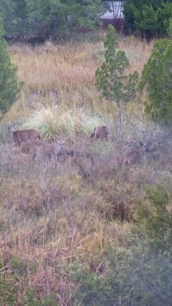 Herten zijn altijd aanwezige - uitzicht vanuit de woonkamer raam