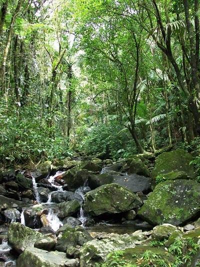 El Yunque rainforest.