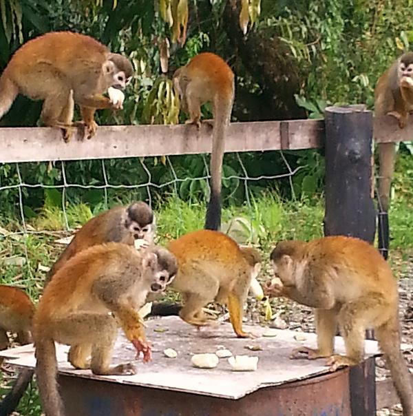 Bunch of Monkeys!!