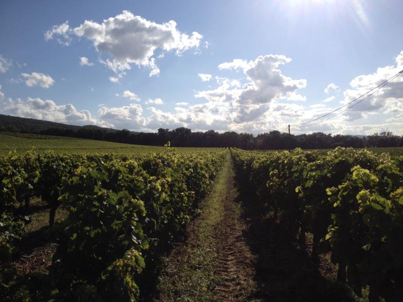 Take a walk through the vines