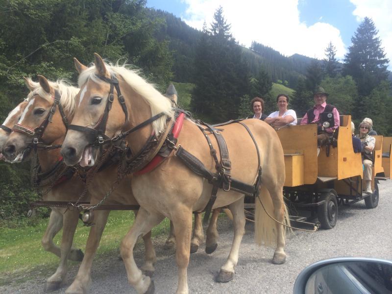 Horse driving wildschoenau austria
