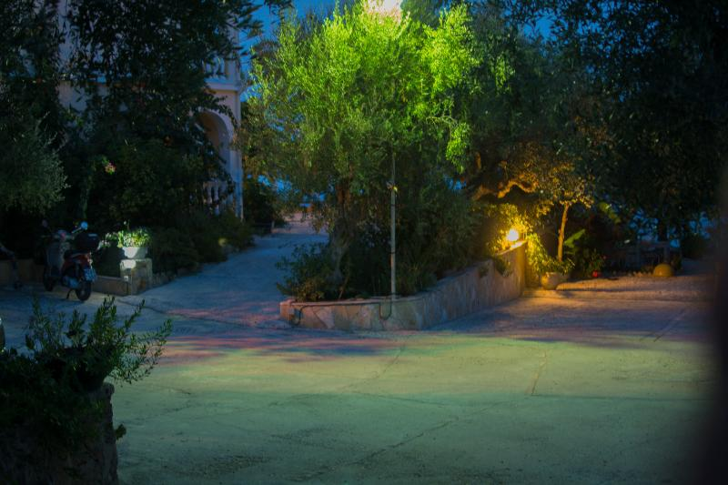 the garden in the night