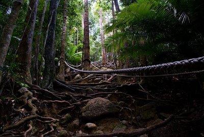 One of the Treks up Engku Busu Hill
