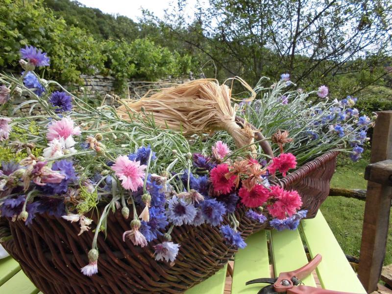 Flowers from garden.