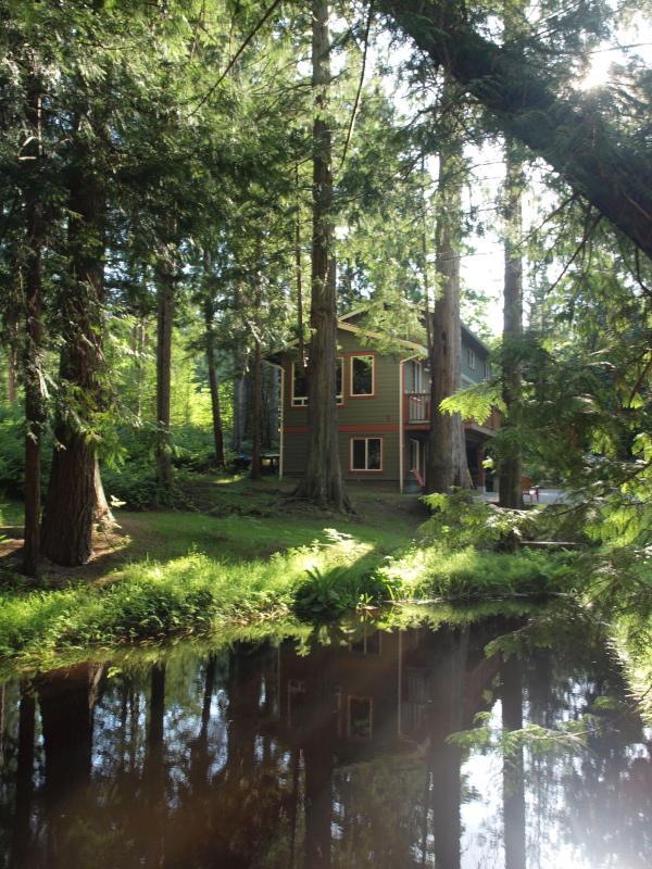 The big pond with cedars