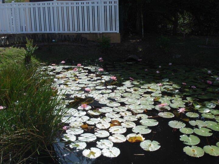 Resort entrance pond