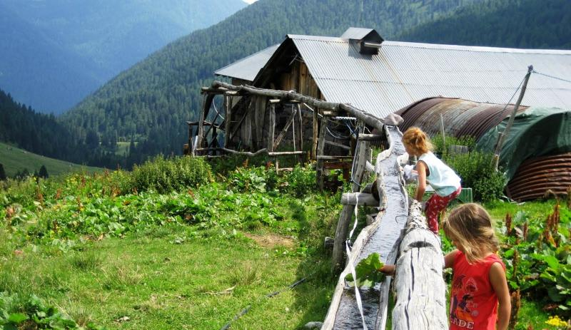 natura e adotta una mucca, Appartamenti Il Gufo Vacanze - Valsugana, Trentino Alto Adige