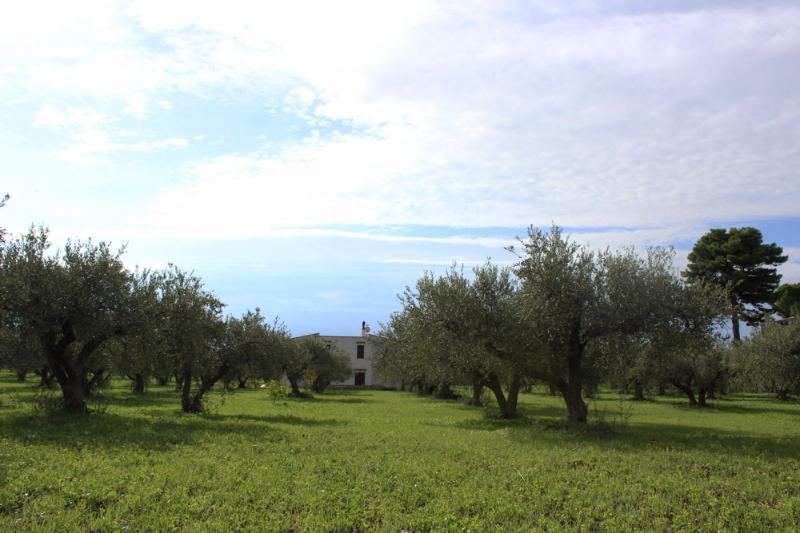 Villa Contrada Miracoli, holiday rental in Salaparuta