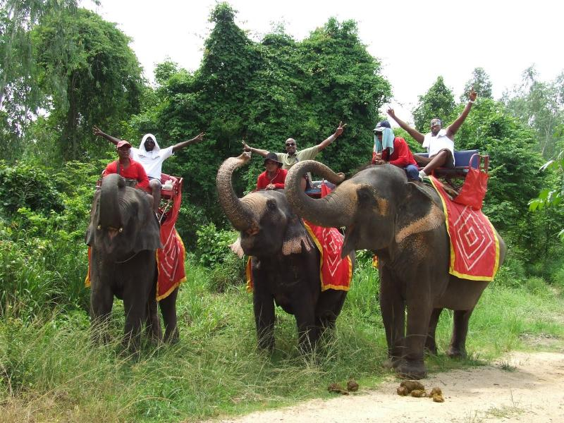 Elephant safari and jungle trek. Great fun for all the family