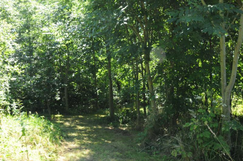 Our woodland