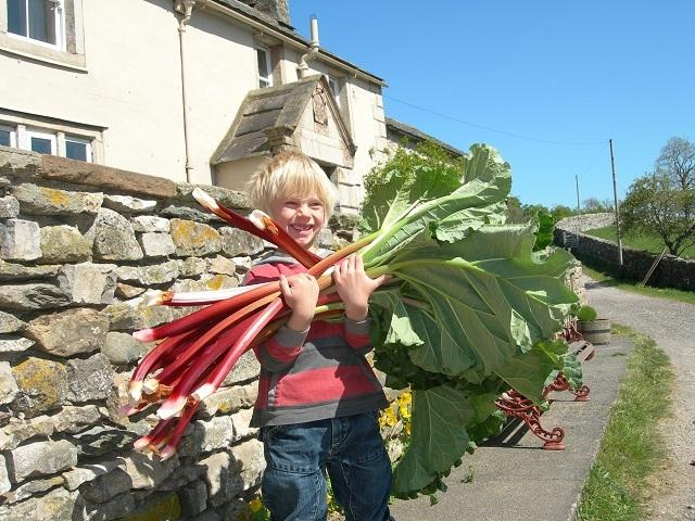 Rhubarb!  And loads of it!!  Grown in the garden in the well stocked veg plot.
