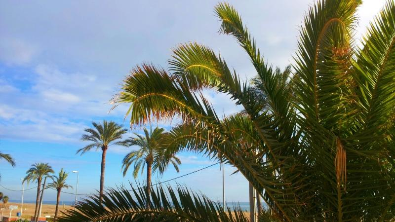 more palm trees on the promenade