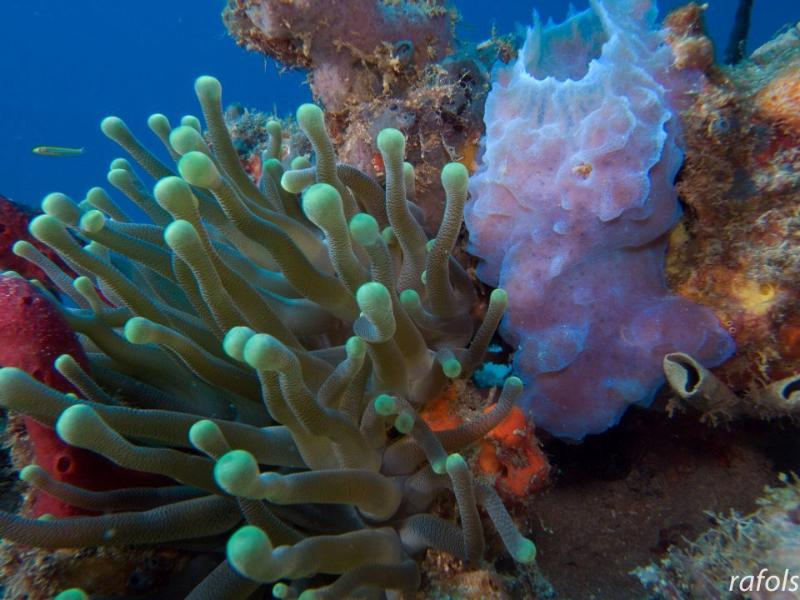 Aquatica Dive Surf SUP Tours