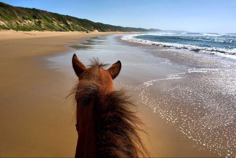 Horseback Ridding