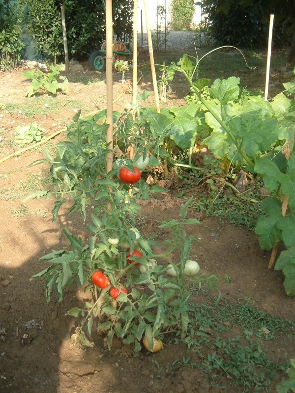 Vegetable garden at guest's disposal