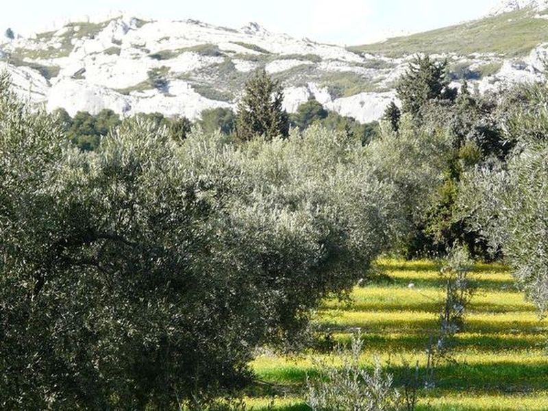 Alpilles Natural Park