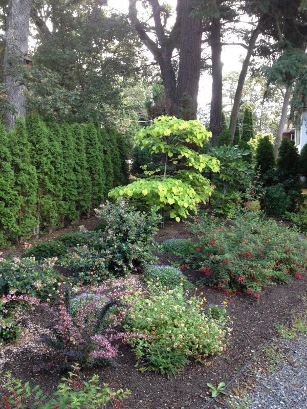 Different front Garden Views