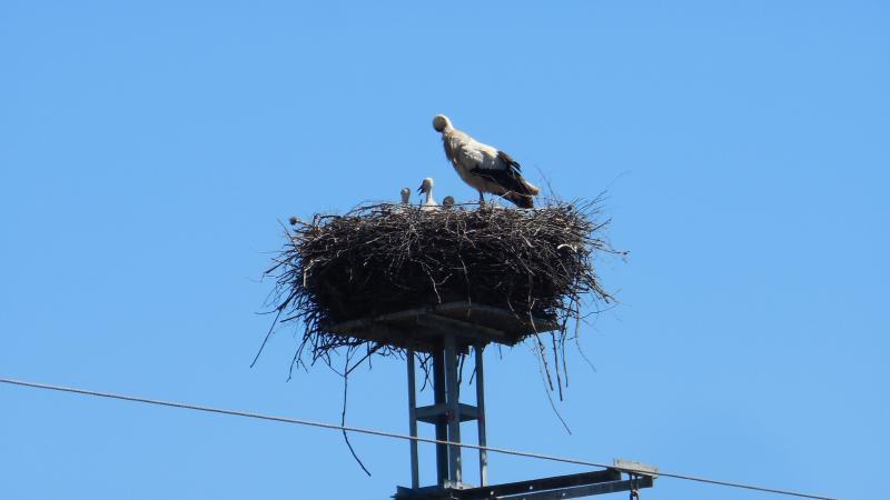 Storks near San Roque