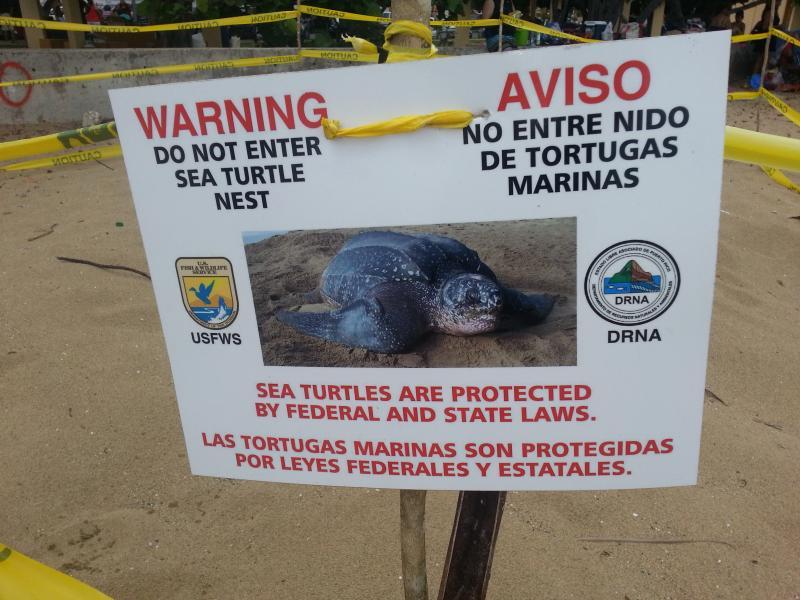 Sea turtle nest.