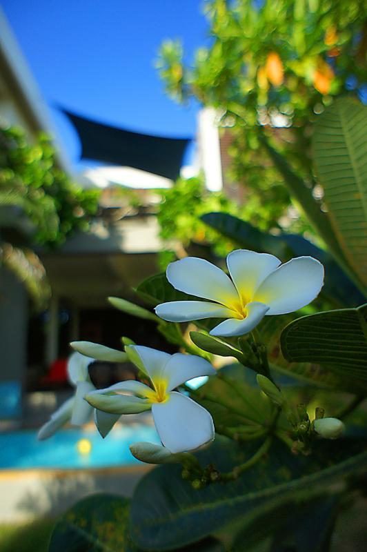 Beautiful tropical garden | The Levels | luxury, sea-view, villa for rent, Koh Lanta, Thailand