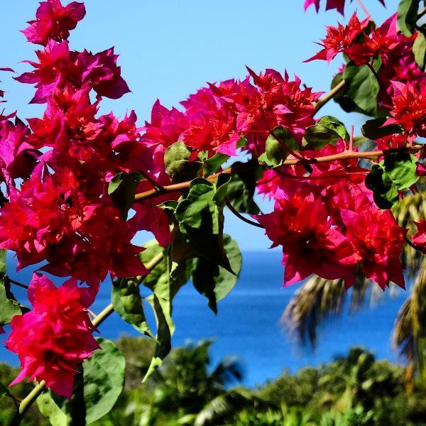 Vista desde el estudio Mangoplaya, Playa Grande-Anse