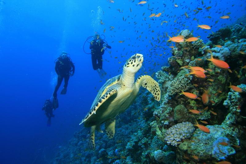 Some of the worlds best diving in Cozumel