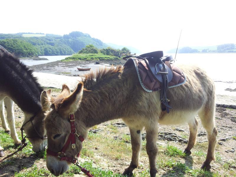 en balade avec les ânes, à 2 km de la ferme