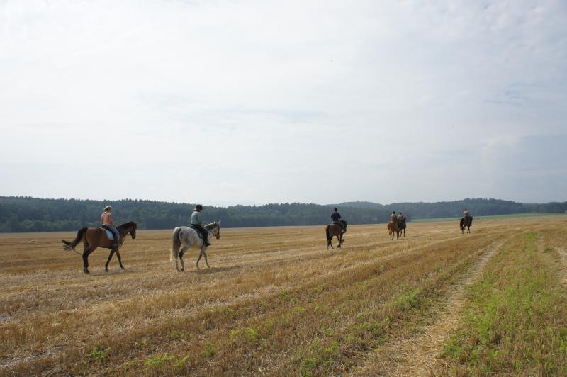 superb horses and instructors on the Czech side. And very inexpensive