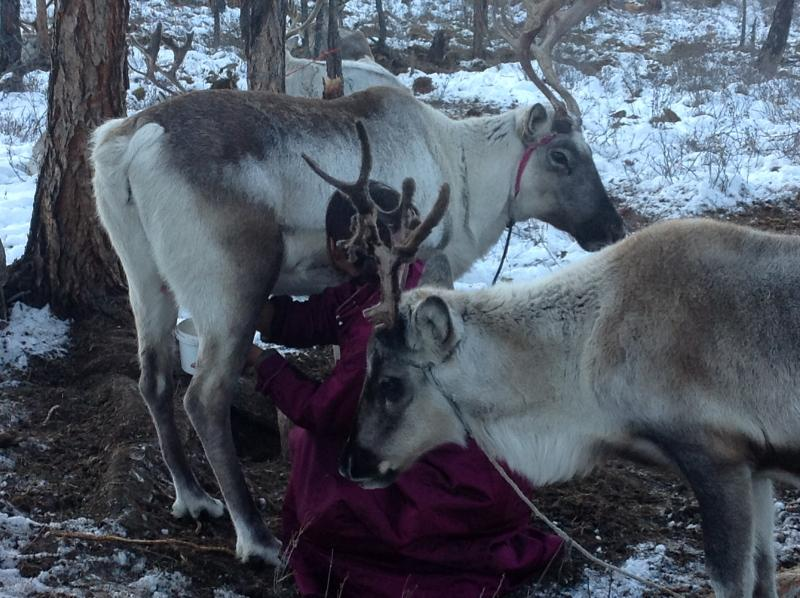 Tipi at the Reindeer Population, holiday rental in Turt