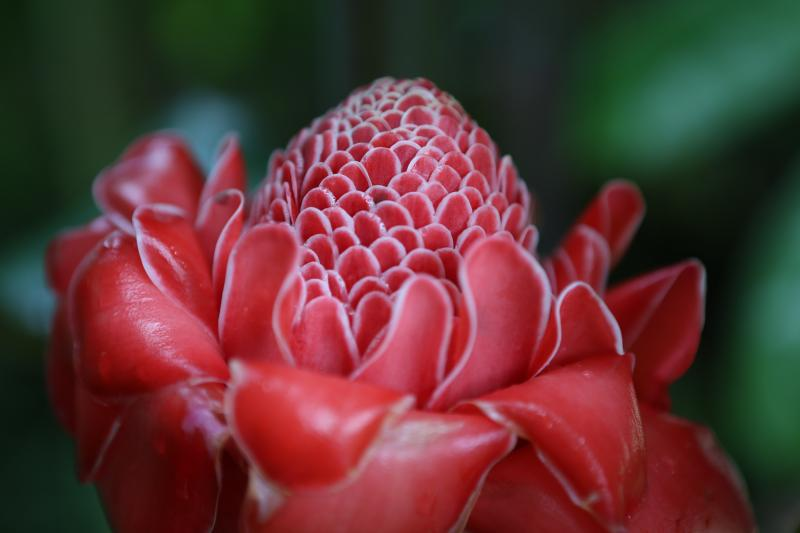 Une fleur du jardin