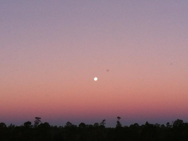 Full moon setting in the early morning over the forest - seen from the master bedroom