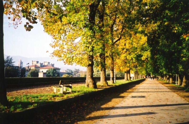 Take a stroll or cycle around the walls of Lucca