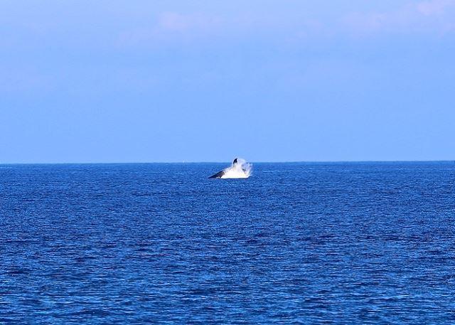 Baleias da costa