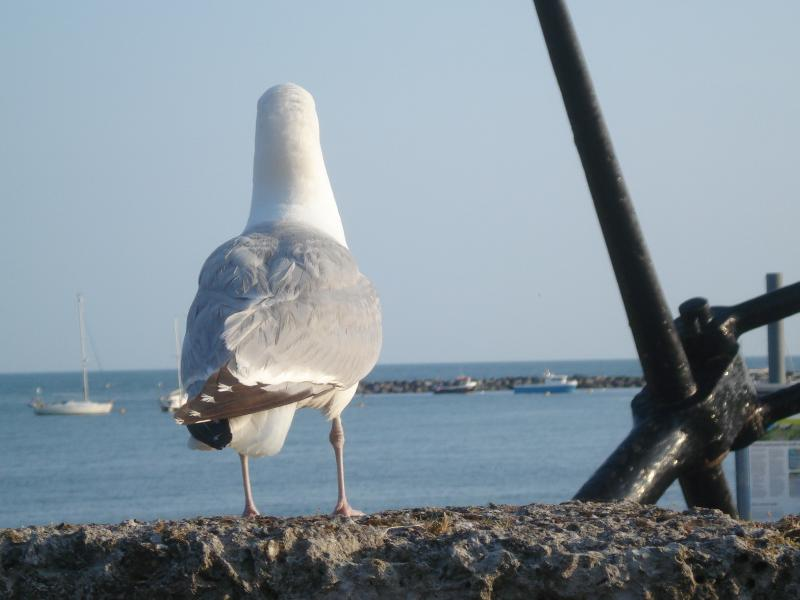 Sea Gulls like to look at the view also!