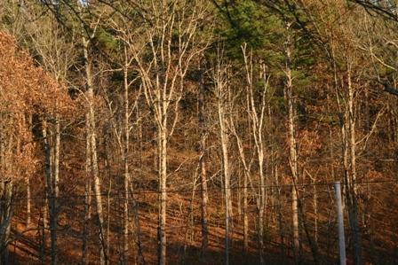 Autumn hillside behind the cabin