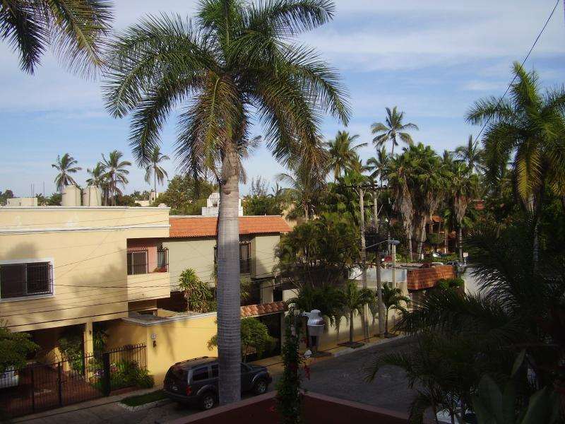 Our east facing terrace surrounded by super tall  and majestic palm trees..