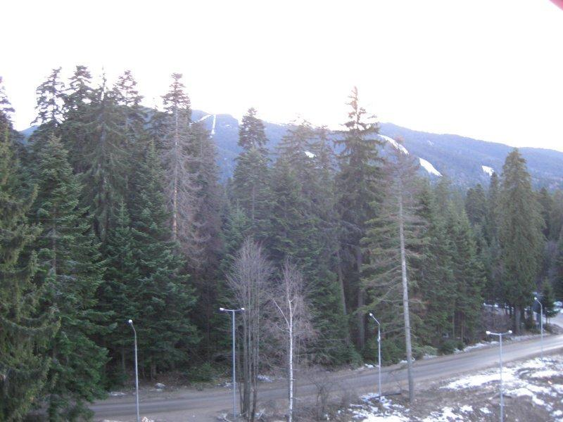 Balcony view of pine forest & top of the ski runs (Popangelov / Yastrebets). Apres-ski Sun-trap!