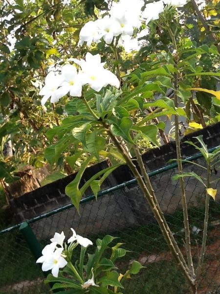 Green wood garden, alquiler vacacional en Poddala