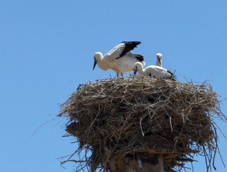 Storks and rare birds migrate to the region every spring