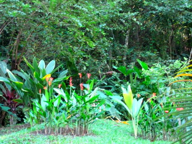 Absorb the lush, tropical flora and fauna throughout the estate…food for your soul