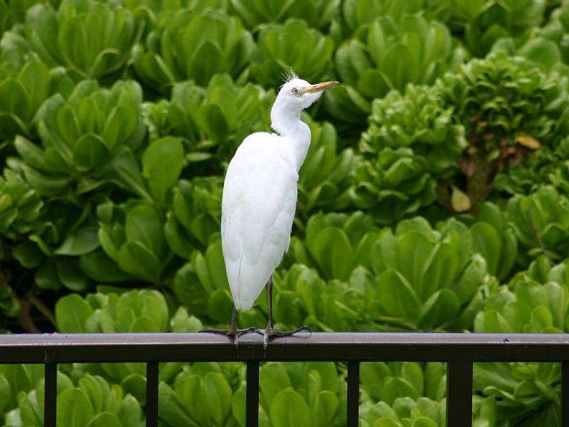 Hawaiian Fauna