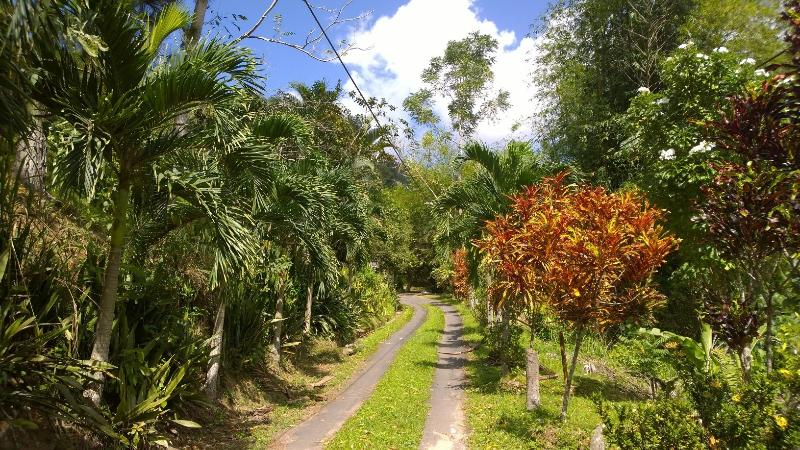Private Driveway lined with palm and colourful crouton plants
