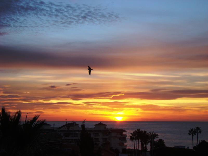 Feel free like a bird watching this amazing sunrise!