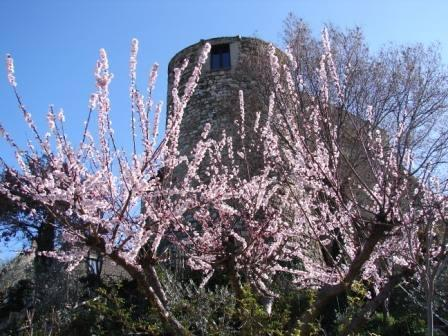 The tower in Spring