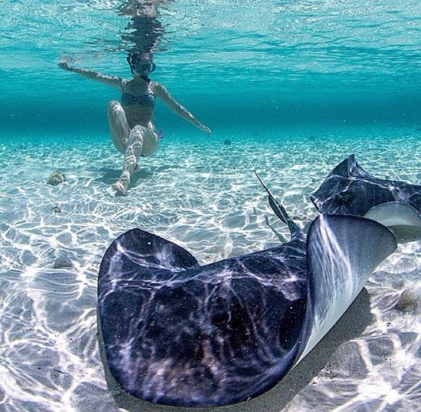 Great shot taken of Bimini life under water