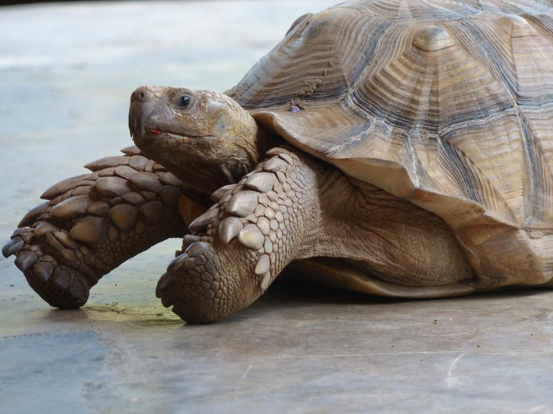 resident turtle guardian ;+O