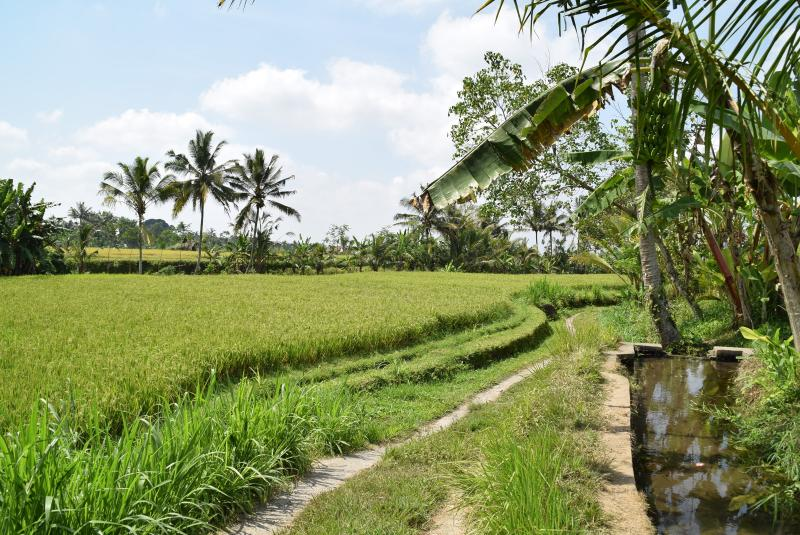 Hiking or biking though the surrounding paddy fields
