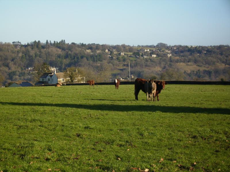 Farm life at Swallows Rest