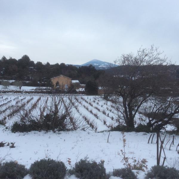 Sneeuw op onze wijngaard